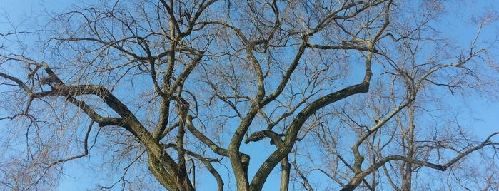 The Elm Tree is one of Boston.