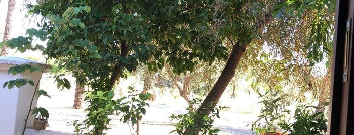 Antalya Zeytinpark is one of Antalya.