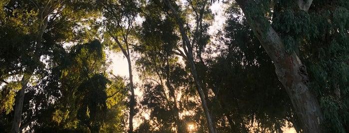 Huntington Central Park is one of Posti che sono piaciuti a Michael.