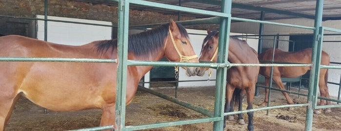 ΜΑΝΗ horses is one of Need fixing.