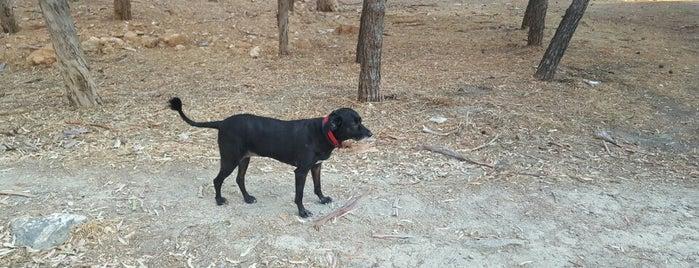 Dog Walk is one of Γ..