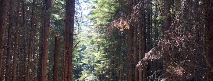 Rattlesnake Ledge Trail is one of Camping/Hiking in Western Washington.