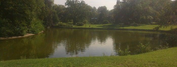 Park am Woog is one of Darmstadt - must visit.