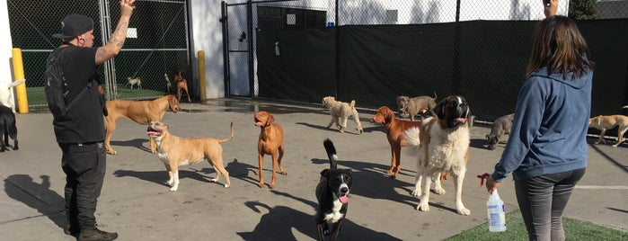 Joyful Paws Pet Hotel & Daycare is one of ¤CANINE DIGS¤.