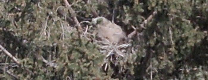 Monte Vista National Wildlife Refuge is one of 82 Best Birdwatching Spots in the US.