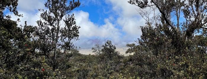 Pu'u 'Ō'ō Trail is one of Hawai'i.