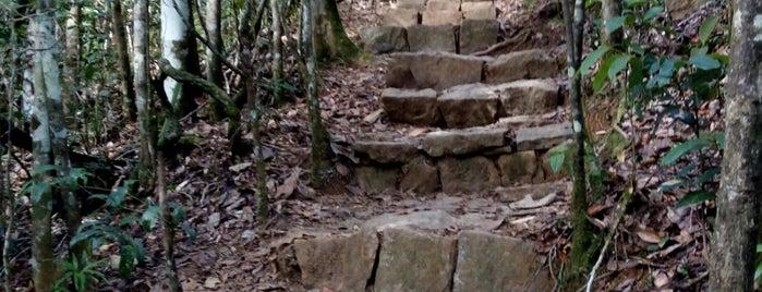 Parc National Andasibe Mantadia is one of Madagascar.