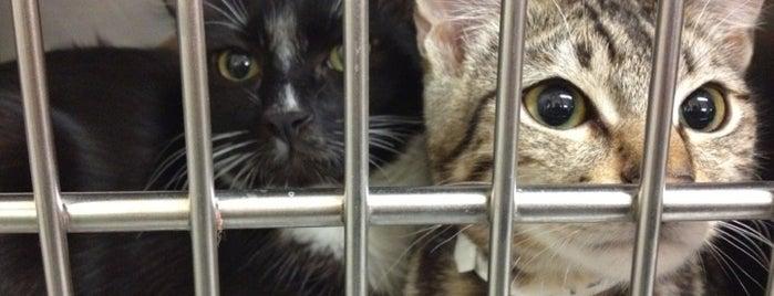 SF Animal Care & Control is one of Posti che sono piaciuti a Spoon.