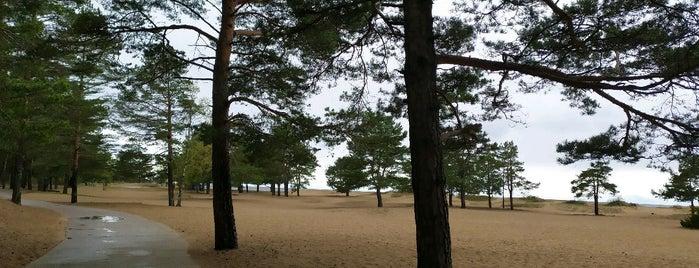 Природный заповедник «Репино» is one of Сестрорецк и побережье Финского залива.