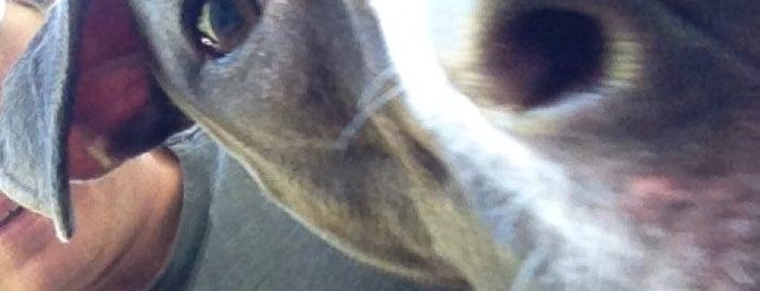 The Canine Coach is one of Lieux qui ont plu à Sharifa.
