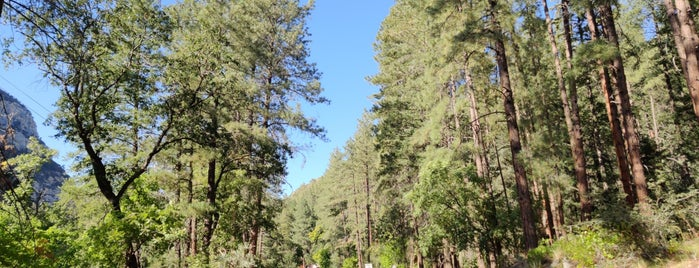 Coconino National Forest is one of Orte, die Bryan gefallen.