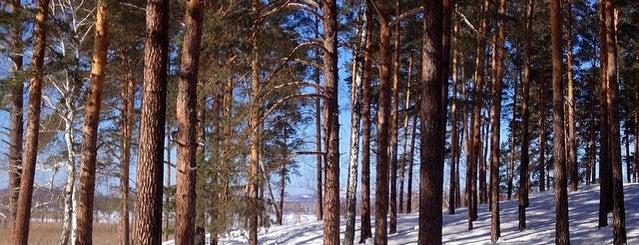 Snow Park is one of Tempat yang Disukai Vlad.