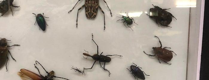 Museo de Bichos e Insectos is one of Museo y Colección.