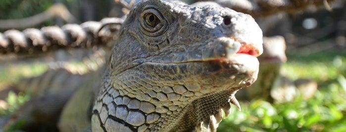 Bali Reptile Park is one of Enjoy Bali Ubud.