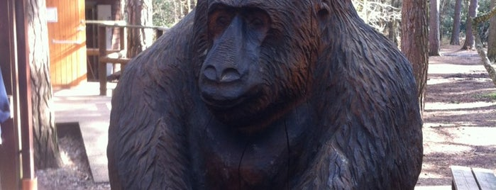 Go Ape Bracknell is one of UK Tourist Attractions & Days Out.