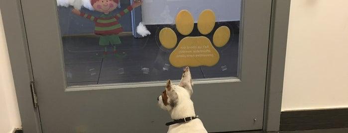 Eco Deco Pet Hospital is one of Posti che sono piaciuti a Danila.