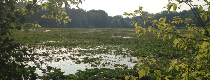 Maplewood Nature Center is one of good for walks.