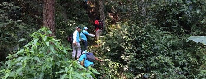 Taman Nasional Gunung Halimun Salak is one of National Parks.