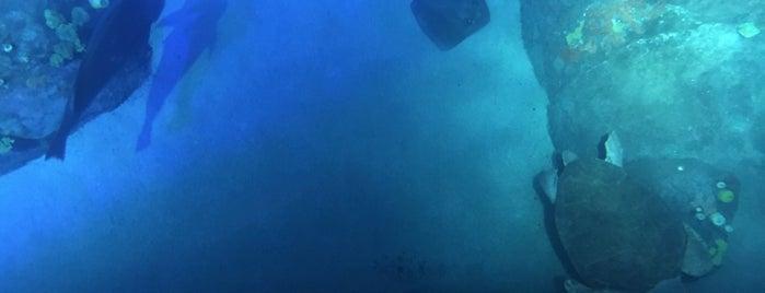 Ocean Wonders: Sharks is one of NYC.