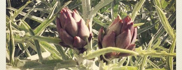 Agriturismo Antica Sosta is one of Toscana.