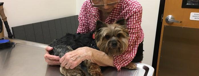 Banfield Pet Hospital is one of Locais curtidos por Jeannie.