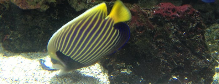 Sea Life London Aquarium is one of United Kingdom.