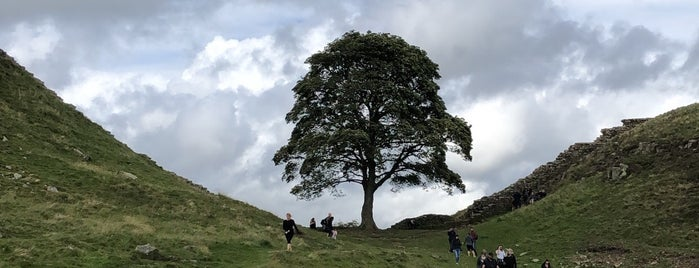 Sycamore Gap is one of Posti che sono piaciuti a Carl.