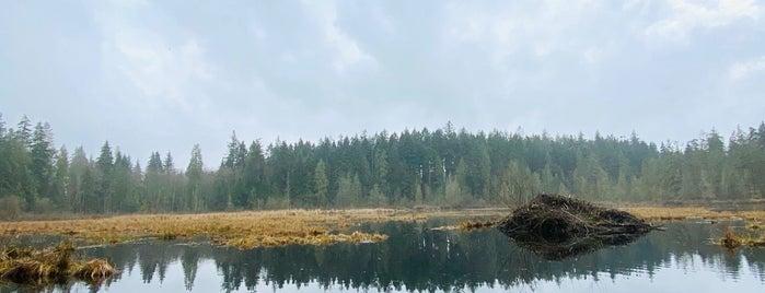 Beaver Lake is one of Sasha'nın Beğendiği Mekanlar.