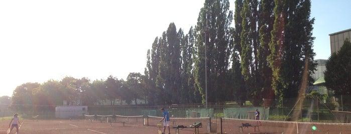 Tennis Hrubesch is one of Austria.