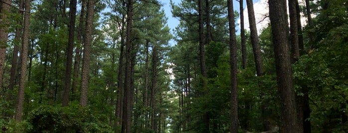 Conway Robinson State Forest is one of Manassas.
