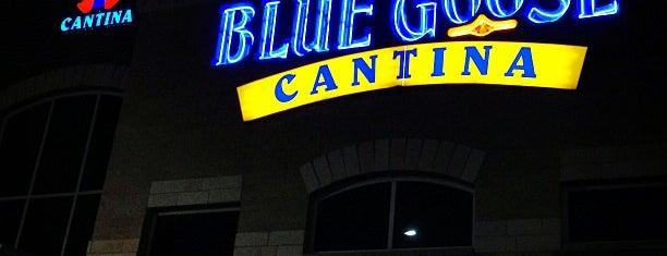 Blue Goose Cantina is one of Lieux qui ont plu à Kina.