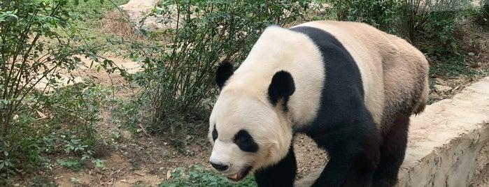 Macao Giant Panda Pavilion is one of Macau.