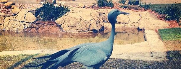 Montecasino Bird Gardens is one of Cape Town Do.