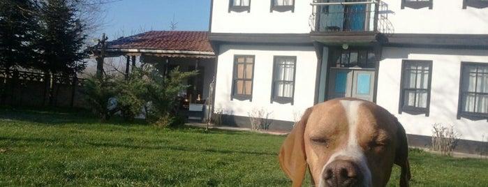 Cigerda Soguksu Köyü is one of Lugares favoritos de hatice.