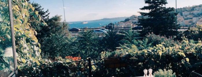 Aurora is one of Istanbul Shisha.