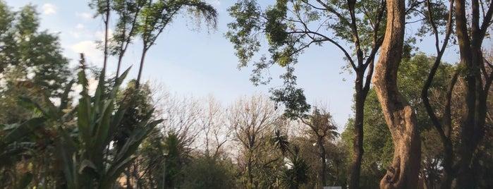 Área de perros Jardín Pascual Ortiz Rubio is one of Posti che sono piaciuti a R.