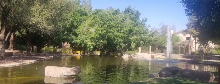 Duck Pond is one of Ryan : понравившиеся места.