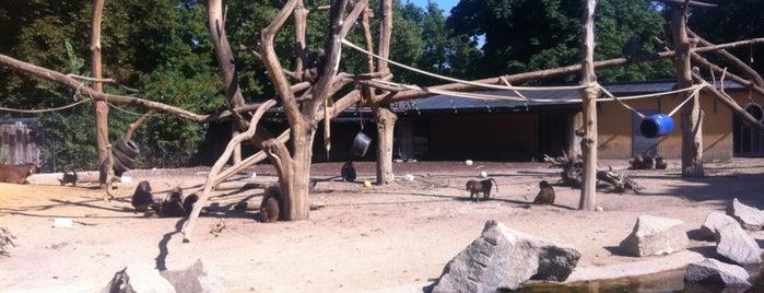 Zoologischer Garten Augsburg is one of Ausflüge mit Kindern.