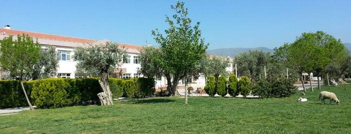 İzmir Özel Tevfik Fikret İlköğretim Okulu is one of Karsıyaka.