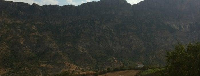 Karadut Pension is one of Tempat yang Disukai Selim.