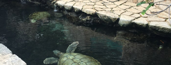 Tortugas is one of Mexico.