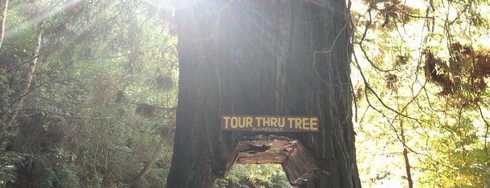 Tour-thru Tree is one of California.