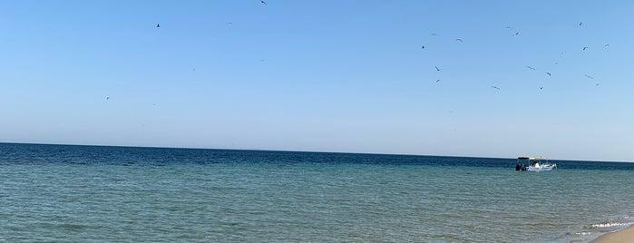 جزيرة أم الشجيرات is one of Posti salvati di Soly.