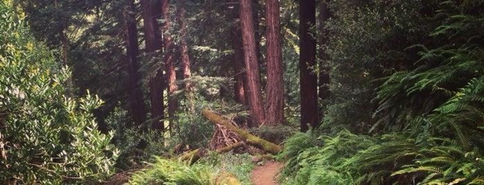 Redwood Regional Park is one of Stephanie'nin Kaydettiği Mekanlar.