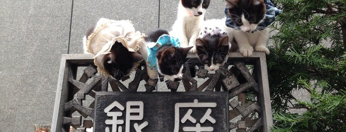 Ginza 4-chome is one of Favorite Cats.