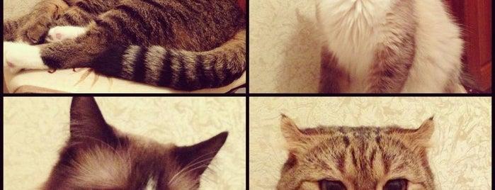 Нечаянная Радость Наша❤ is one of Favorite Cats.