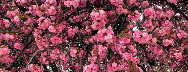 Ботанический сад is one of 🌠.