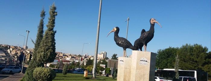Haleplibahçe is one of Urfa.
