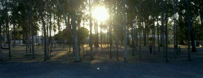 Parque Euclides Dourado is one of Filipe'nin Beğendiği Mekanlar.