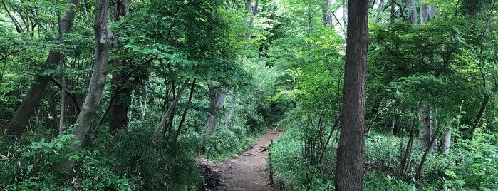 黒川清流公園 is one of Lieux qui ont plu à モリチャン.